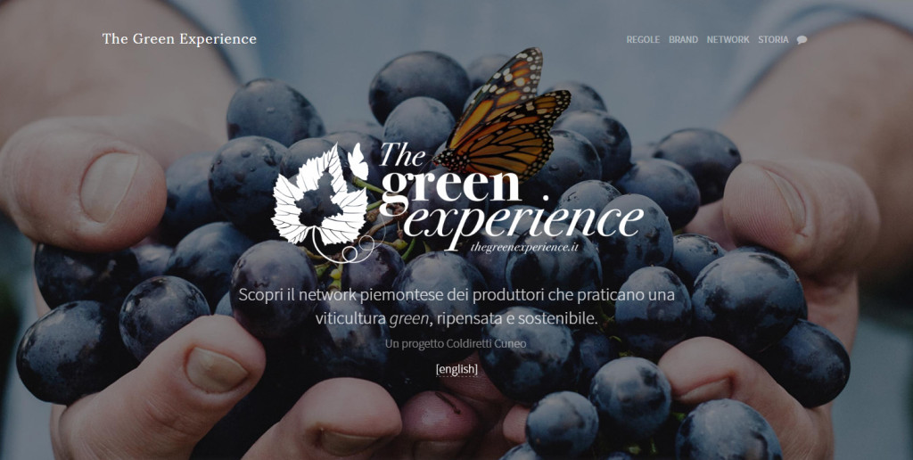 green_experience_1